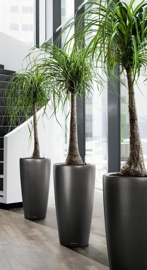 Palms in Foyer