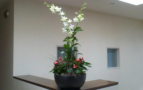 White Dendrobium with Red Anthurium