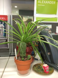Plants in Office
