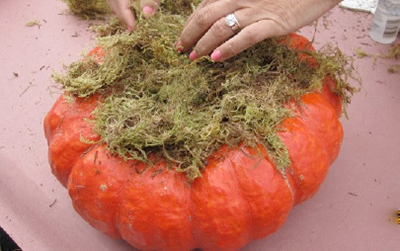 Pumpkin with moss