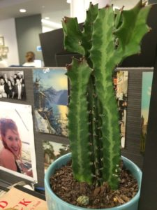 Cactus on office desk