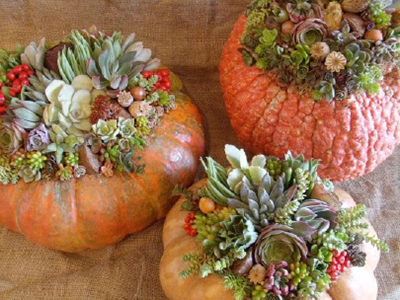 Halloween Ideas with succulents and Pumpkins.